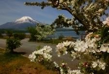 ズミの花.jpg