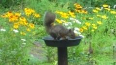 庭を訪れたリス