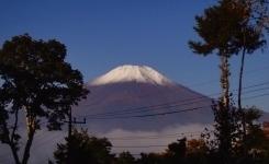 初冠雪.jpg
